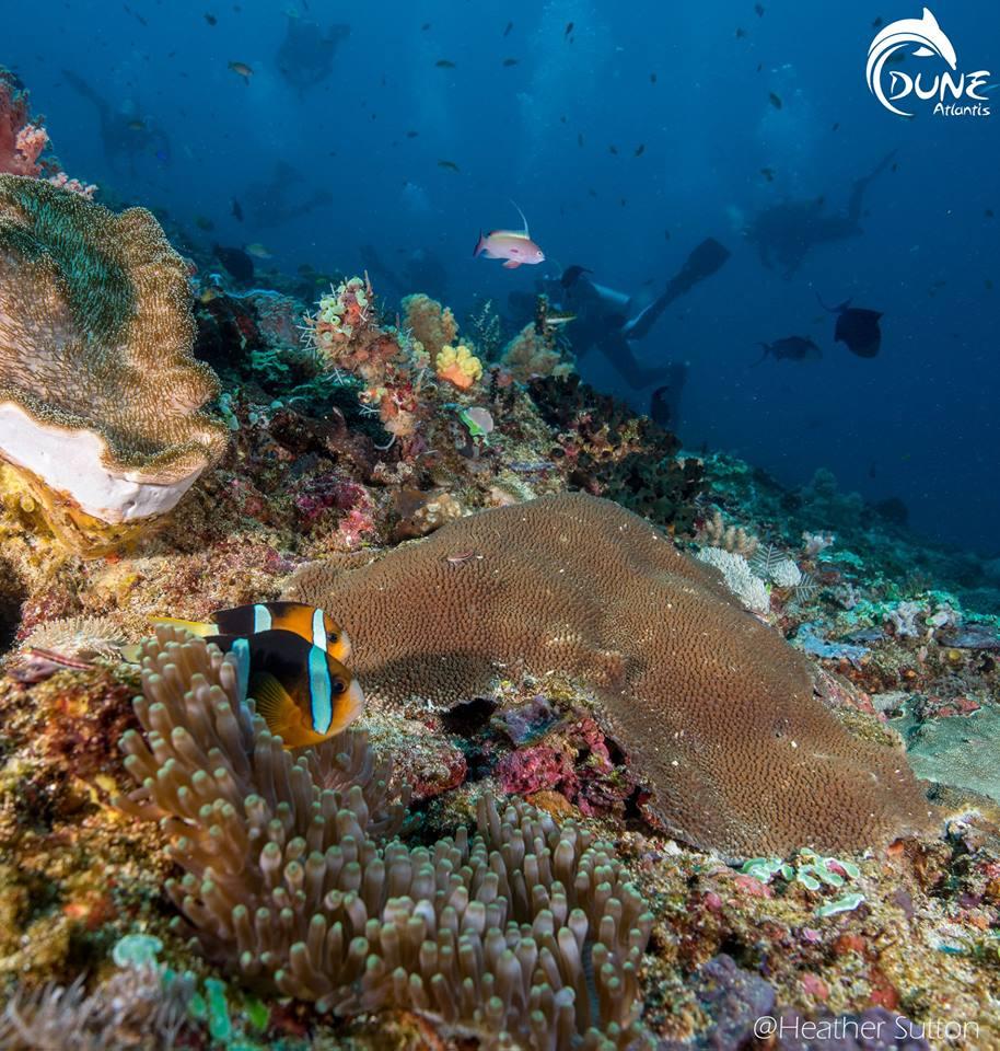 Tout savoir sur la plongée Bali Tulamben
