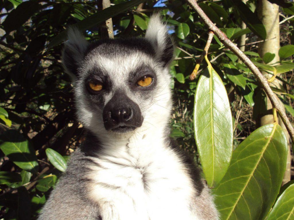 Madagascar: un pays francophone très riche de la nature