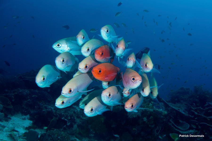 Qu'est-ce qui rend la plongée à Amed différente des autres sites de plongée à Bali?