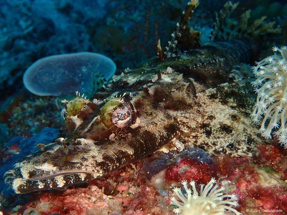 Plongée bali tulamben : le paradis du plongeur