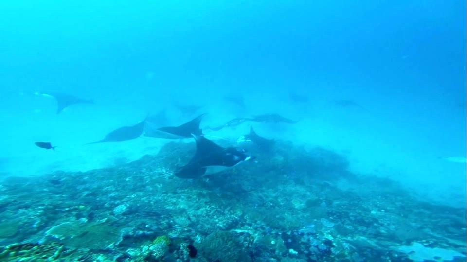 Vivez une belle journée de Plongée Sous Marine Bali
