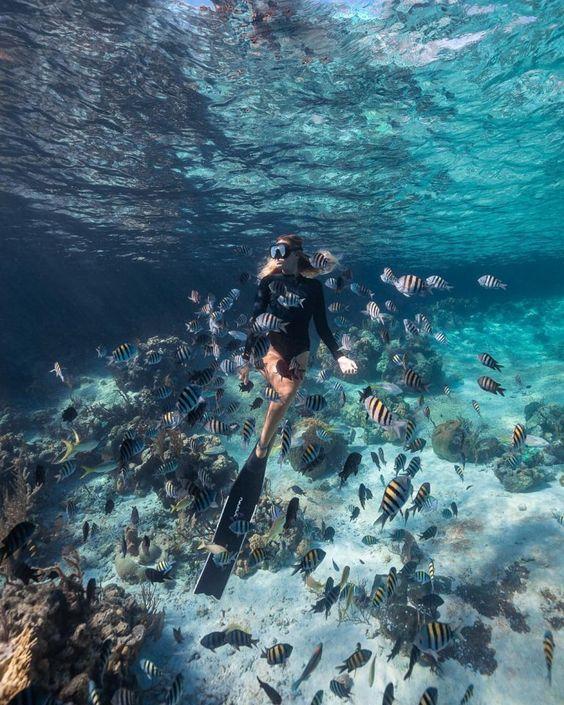 Une Expérience Extraordinaire Plongée à Bali